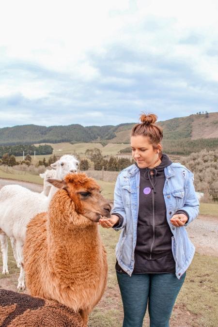 Things to do in Rotorua. Agrodome Rotorua