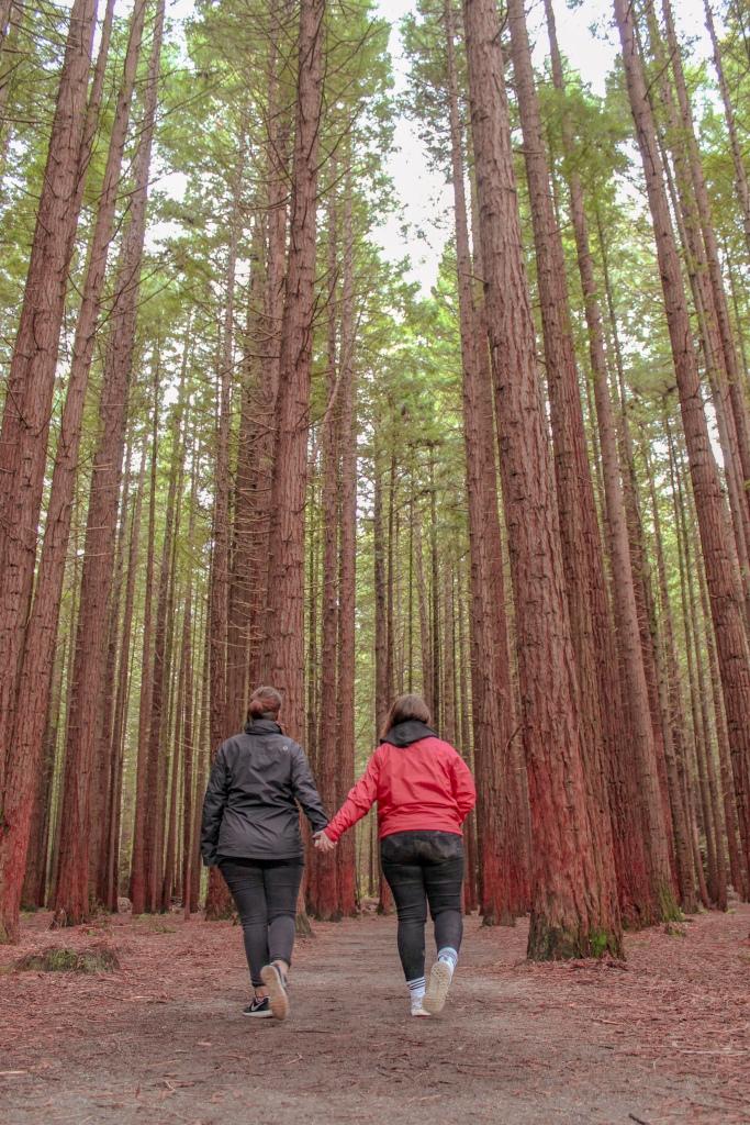 Things to do in Rotorua. Redwoods Rotorua