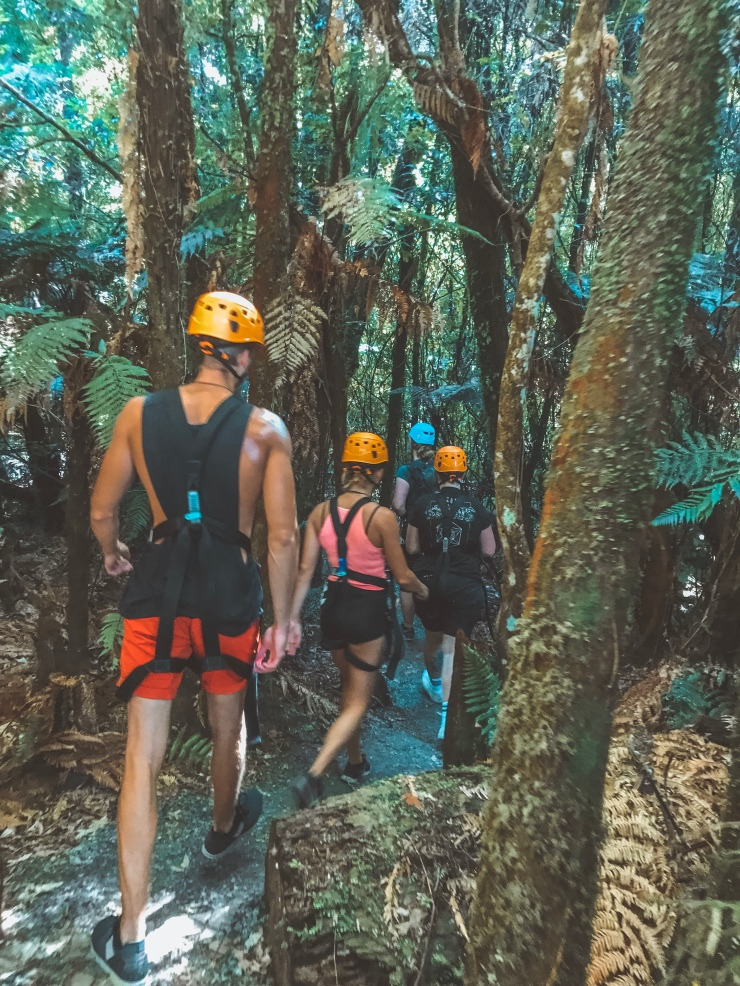Canopy Tours Rotorua top thing to do in New Zealand